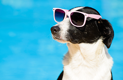 Pet Insurance Can Be Your Wallet's Best Friend